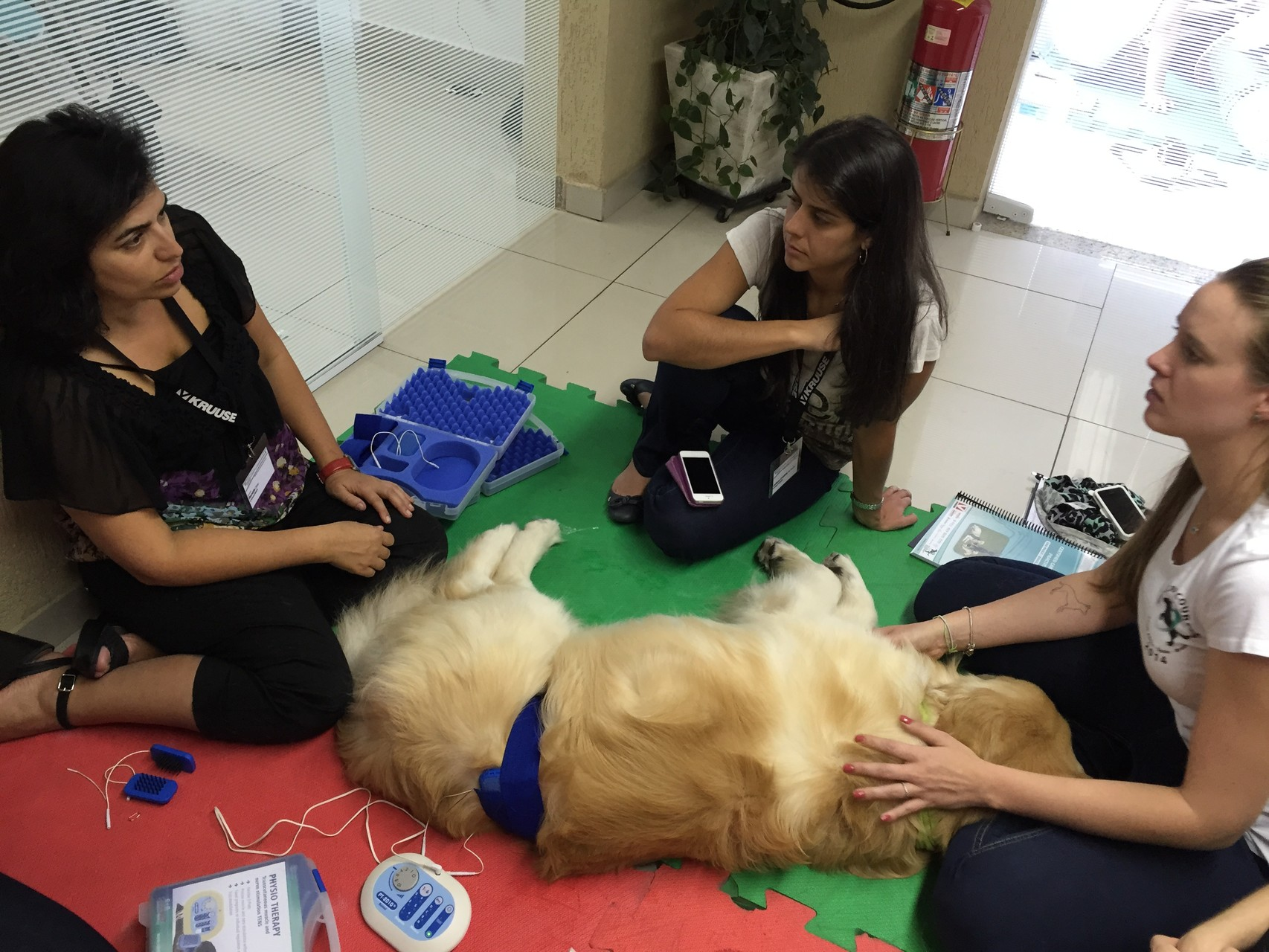 Practical training at the course for canine physical therapy and rehabilitation in Brazil