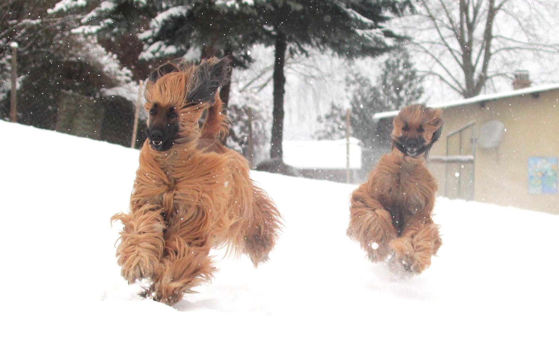 ja wir lieben alle den Schnee!