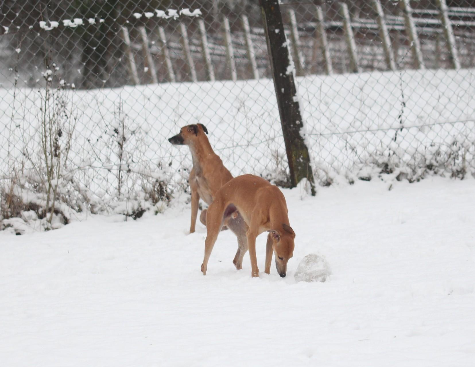 Wir lieben den Schnee und die Kälte