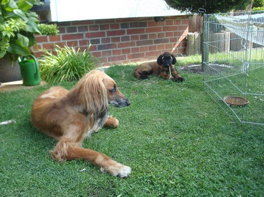 Yakira mit ihrer neuen Freundin Shana
