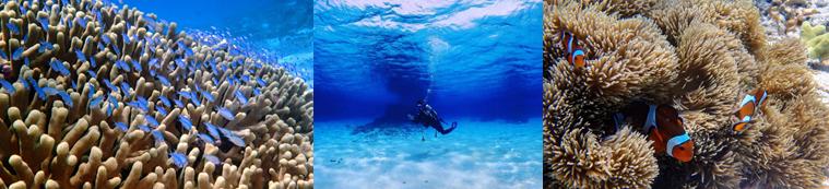 与論島ダイビング