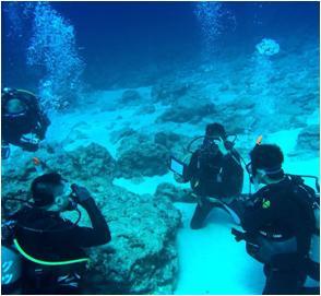 奄美群島 旅行 ダイビング