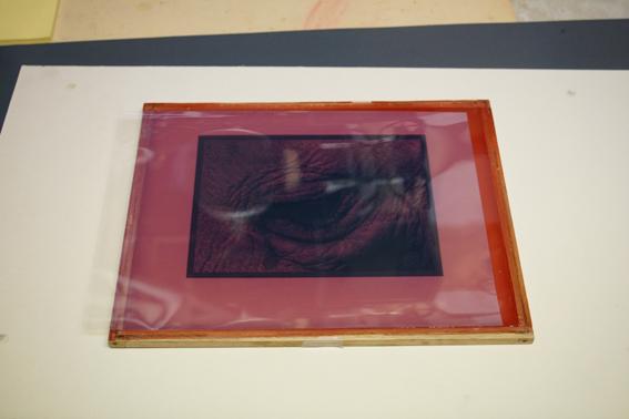 le film positif est placé face imprimée contre le film de gélatine photosensible
