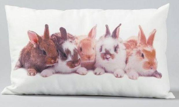 Kissen Hasenbande