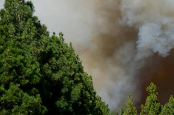 Rauchbildung bei Waldbrand
