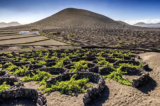 Weinanbau auf den Kanarischen Inseln, Casa Madera