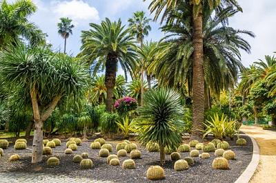 Palmen im Palmetum Santa Cruz