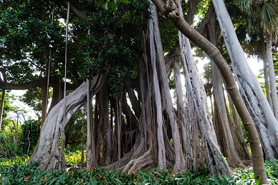 Botanischer Garten in Puerto de la Cruz