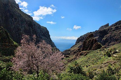 Mandelblüte, Mascaschlucht, Teneriffas Nordwesten