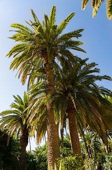 Wanderwege Teneriffa und Palmen überall