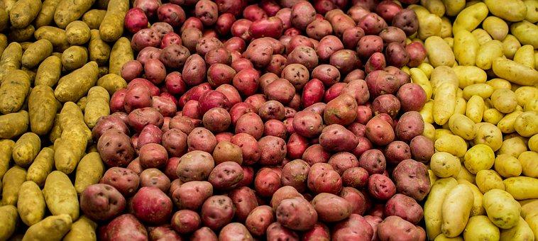 Kartoffeln, Papas in den verschiedensten Farben und Formen