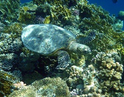 Teneriffa Tierwelt Schildkröte