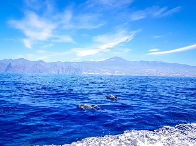 Delfine und Wale in Los Gigantes Teneriffa