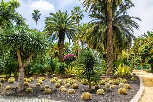 Botanische Gärten auf Teneriffa Teil 1