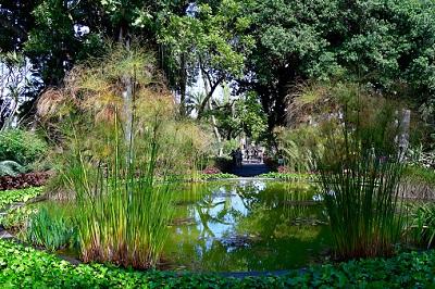 Teich im Botanischer Garten , Puerto de la Cruz