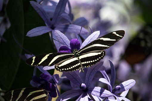 außergewöhnlich schöne Schmetterlinge im Mariposario in Icod de los Vinos am Drachenbaum