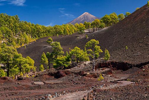 Bilderbuchlandschaft, Teneriffas Vulkan Chinyero, Casa Madera, Wandern