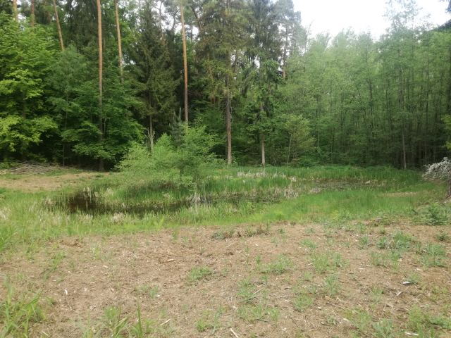 Gewässer am Stallberg nach Forstmulchereinsatz im Winter. Die ufernahen Gehölzen wurden dadurch entfernt, langfristig soll sich eine hochstaudenreiche Vegetation um die Ufer entwickeln.