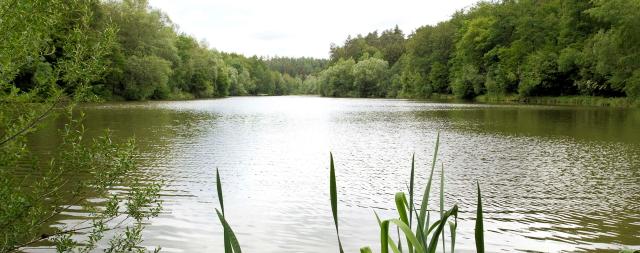 Foto v. N. Bacher: Naturfreunde möchten den Sulzbachstausee und die Umgebung in seinem jetzigen Zustand erhalten!