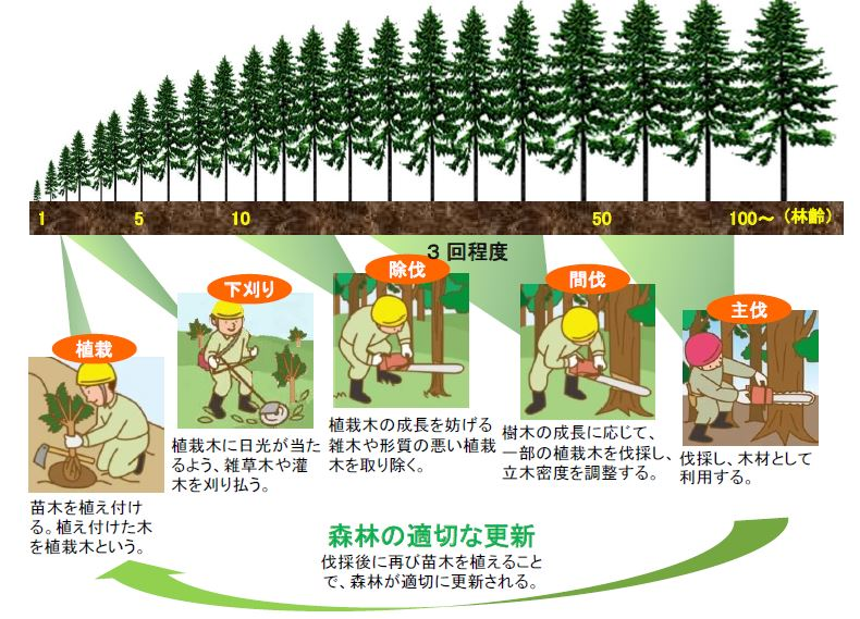 「森林の現状と課題」(林野庁)から抜粋