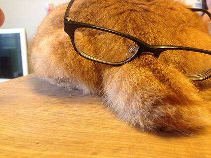 猫 ネコ しっぽ 眼鏡 メガネ わからずに わからない 開放弦 調弦 重音 音程 取り方 差音 ヴァイオリン教室 バイオリン レッスン