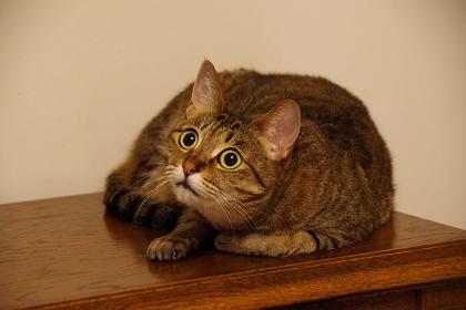 驚いた猫 驚くネコ 重音 音程 取り方 差音 ヴァイオリン教室 バイオリン レッスン