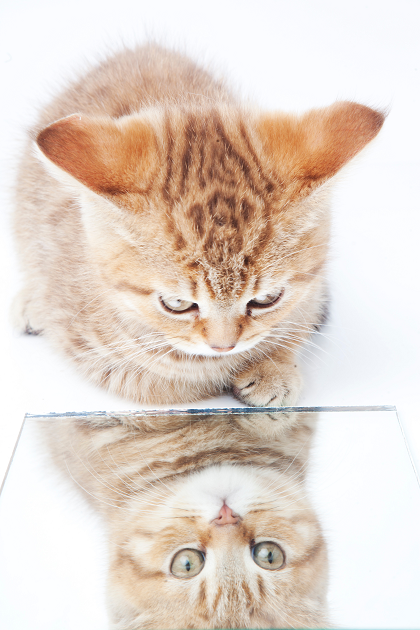 鏡を見る猫 ヴァイオリン教室 バイオリン レッスン