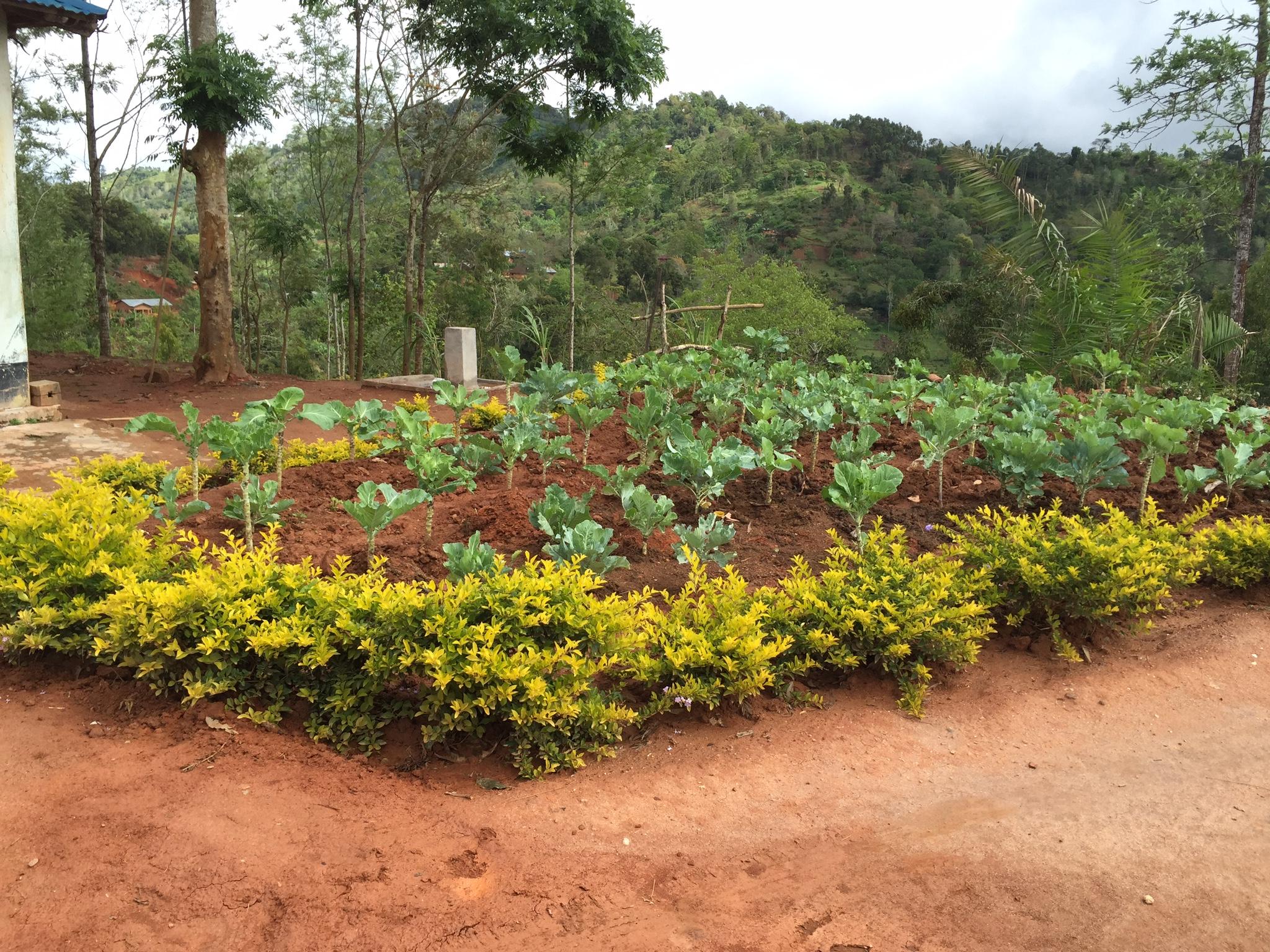 Neue Felder mit Gemüse dank des Wassers