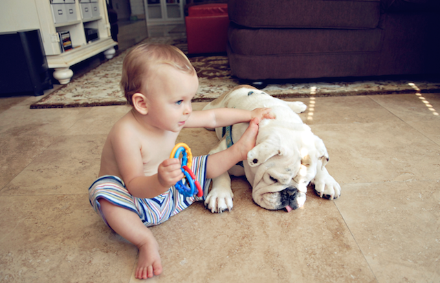 bebes, fotografías, photography, maternidad, mascotas