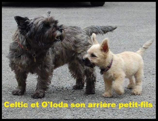 Celtic Night et son arrière petit fils O'Ioda
