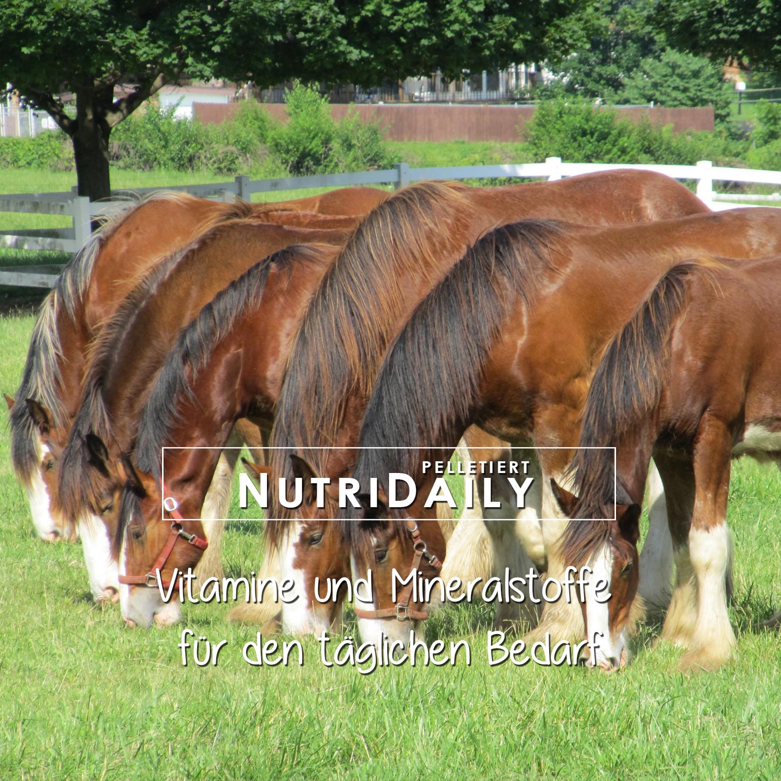 Vitamine und Mineralstoffe für Pferde bis zum 15. Altersjahr, mit Selen, Zink, Eisen, BetaCarotin, Magnesium, Mangan und vielen mehr