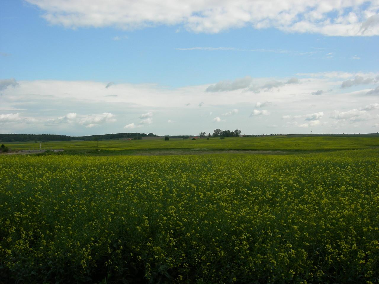 weite grüne Flächen