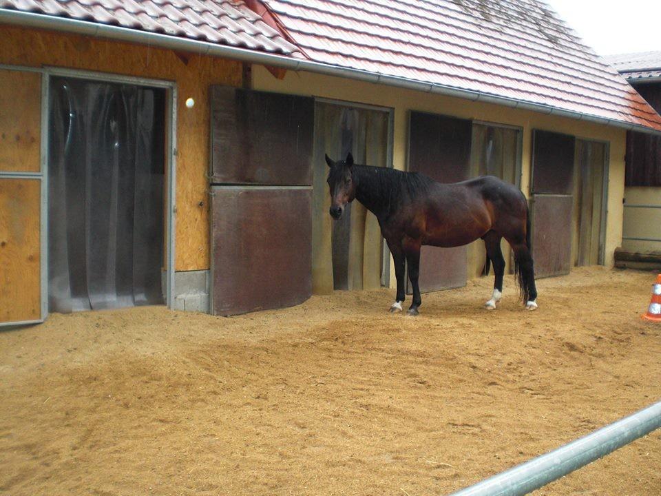 King 2013 in seiner extra für ihn gebauten Box mit Paddock-Zugang