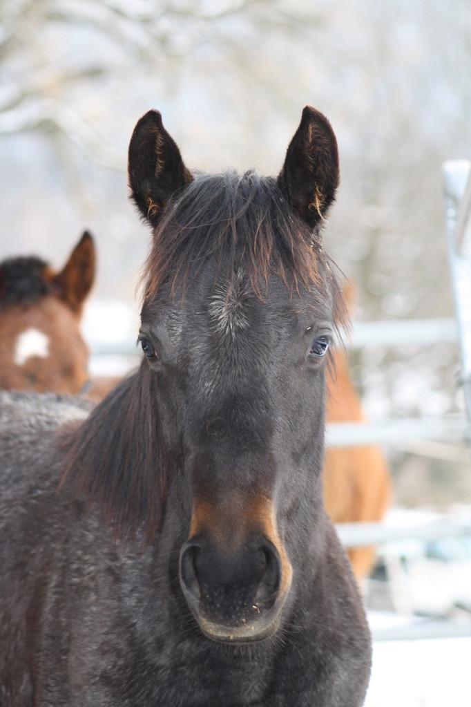 Joleene im Winter 2012/13 in der Schweiz