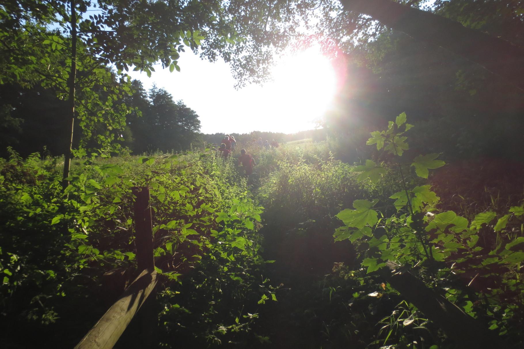 Kulmbach: Im Gründla der Abendsonne entgegen