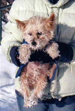 Snowdog Larry