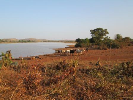 Après le temps d'échange avec la CCB (communauté chrétienne de base) de Bonyolo, nous allons jusqu'au barrage «collinier» : il a transformé la vie des agriculteurs …  Les cultures feraient pâlir d'envie les maraîchers léonards! l