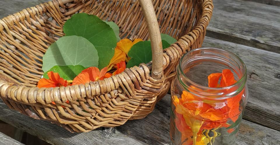 Heilpflanzen-Rezept: Kapuzinerkresse-Tinktur   Natürliches Phytobiotikum