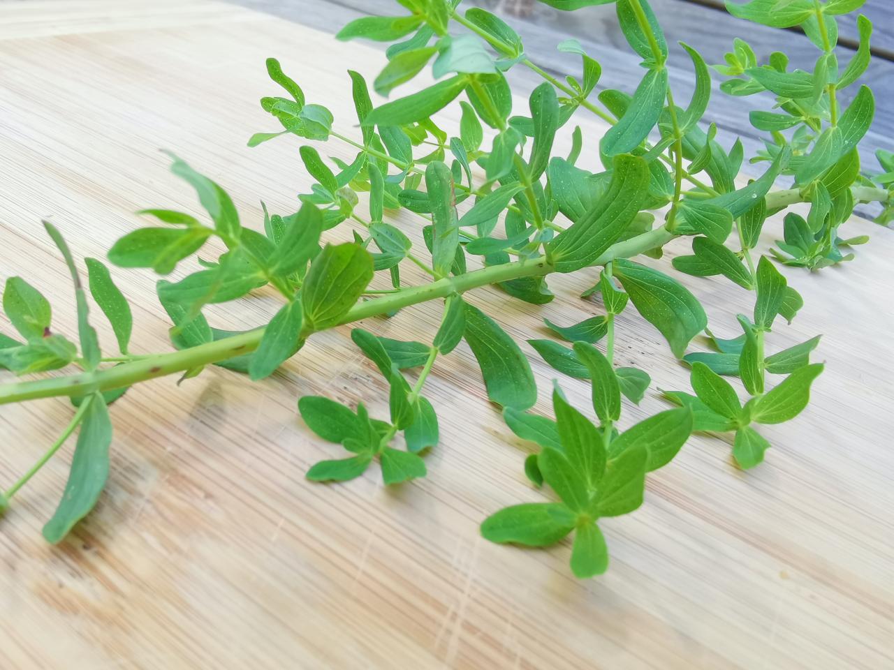 Johanniskraut Blätter