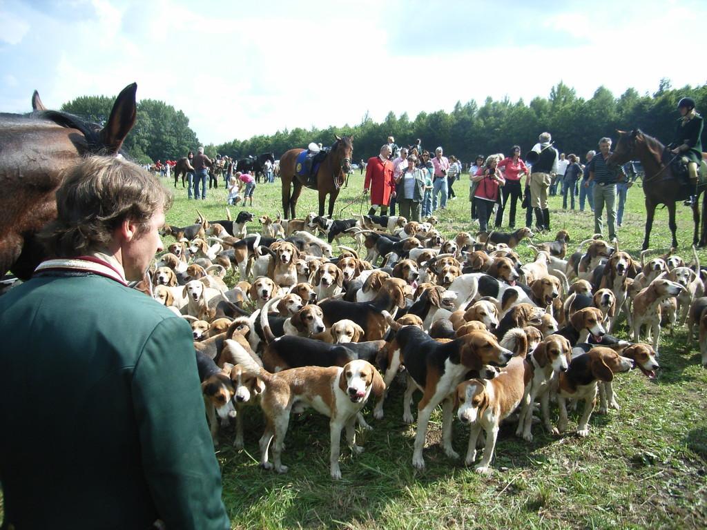 les 160 chiens des 5 meutes