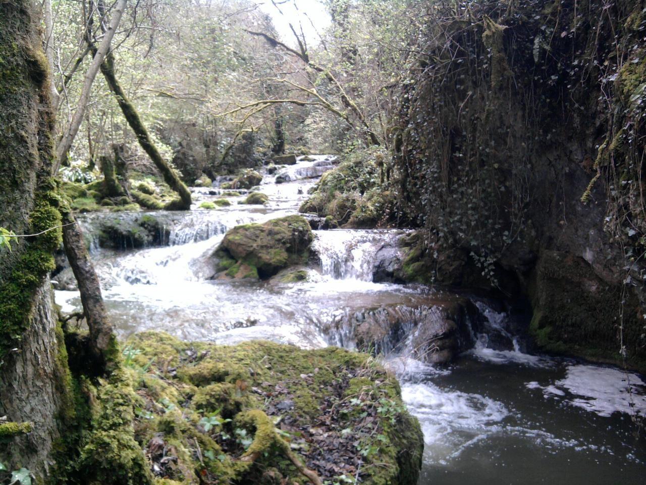 """Ruisseau """"Le Créneau"""""""