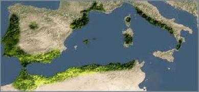 Groen zijn de gebieden waar Kurk wordt geoogst