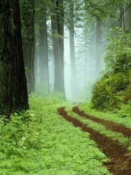 Der Weg ist das Ziel (Konfuzius)
