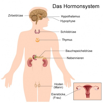 Hormonstörungen und Hormonsystem