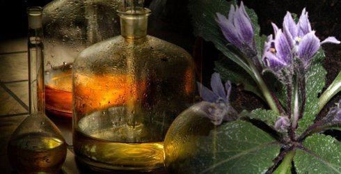 Phytotherapie - Die Pflanzenheilkunde Unter Phytotherapie versteht man die Behandlung und Vorbeugung von Krankheiten und Befindlichkeitsstörungen durch Pflanzen