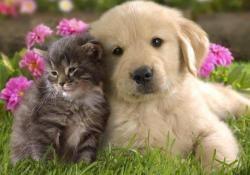 Vitale und gesunde Tiere durch Klassische Homöopathie - sanft, wirkungsvoll und dauerhaft  Die Homöopathie gehört zu den Regulationstherapien. Sie unterstützt die körpereigene Selbstregulation und strebt durch aktive Beteiligung des Organismus Heilung