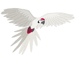 ara adult albino 250x200