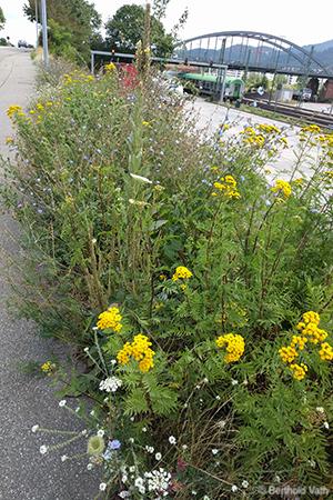 Foto Wildblumen am Straßenrand