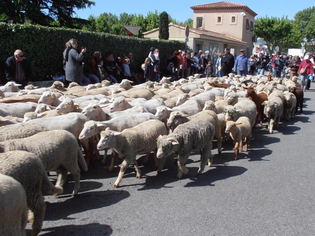 Праздничное дефиле, посвященное перегону овец