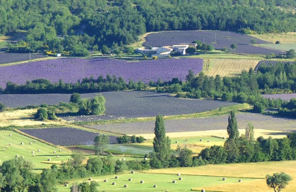 Лавандовые поля вокруг деревушки Солт